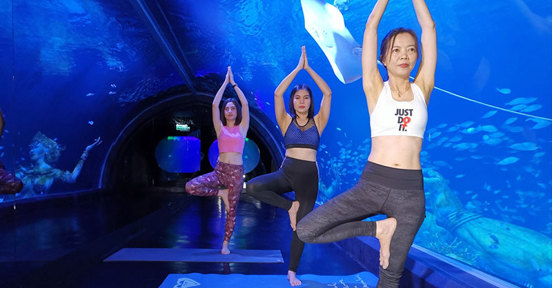 Yoga With The Shark atAquaria Phuket